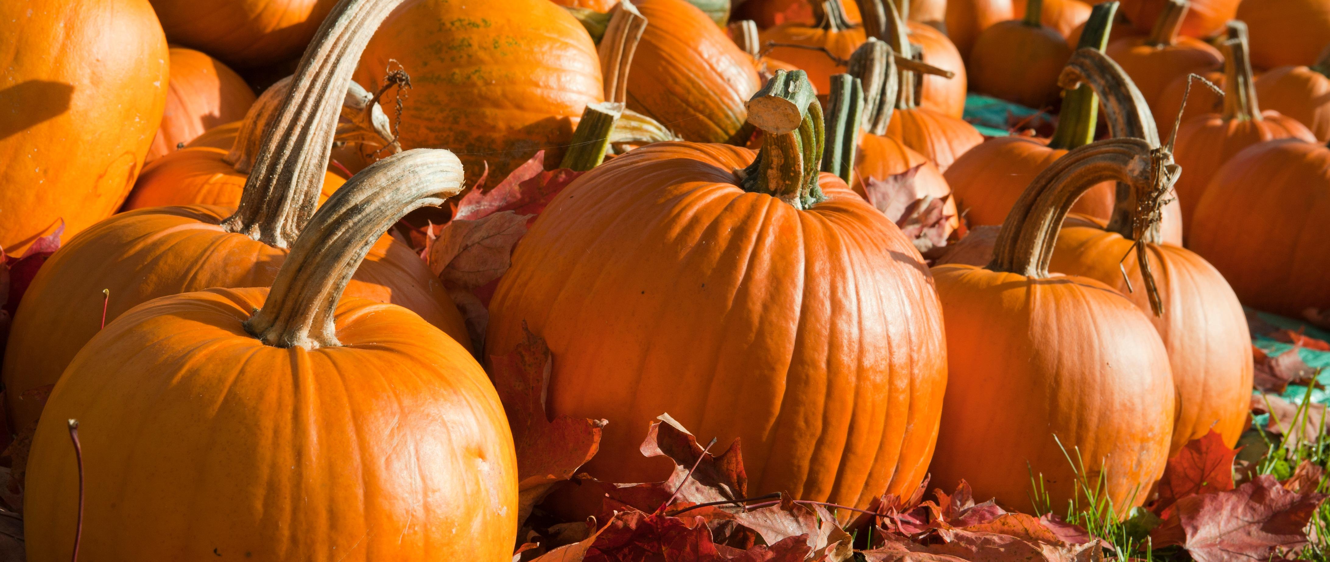 Pumpkin Facts-146900368